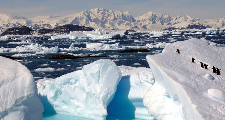Antarctica, South Georgia & Falkland Islands 21 Days - Scenic Luxury Cruises & Tours