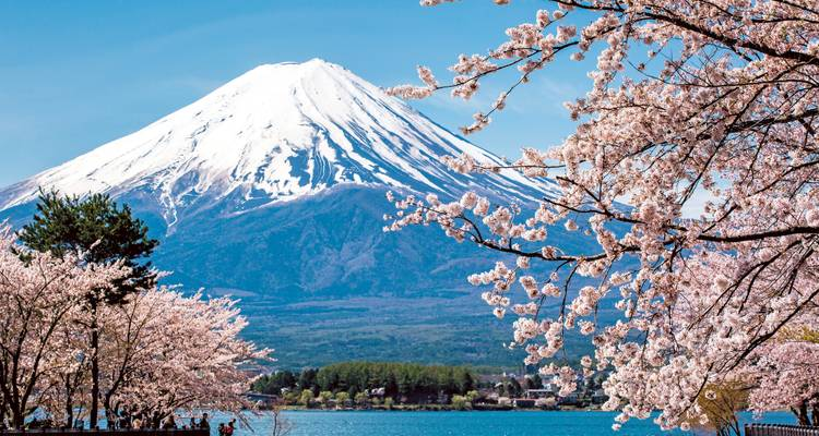 Essential Japan - Scenic Luxury Cruises & Tours