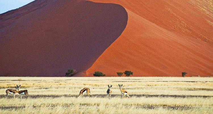 Namibia Untouched 2018 - Scenic Luxury Cruises & Tours