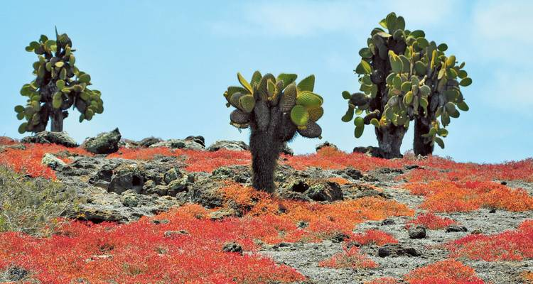 Peru Adventure & Galapagos Cruise - Scenic Luxury Cruises & Tours
