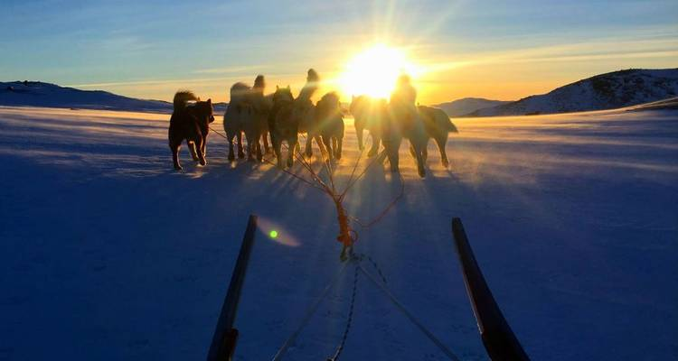 Ice, Dogs & Northern Lights - Icelandic Mountain Guides