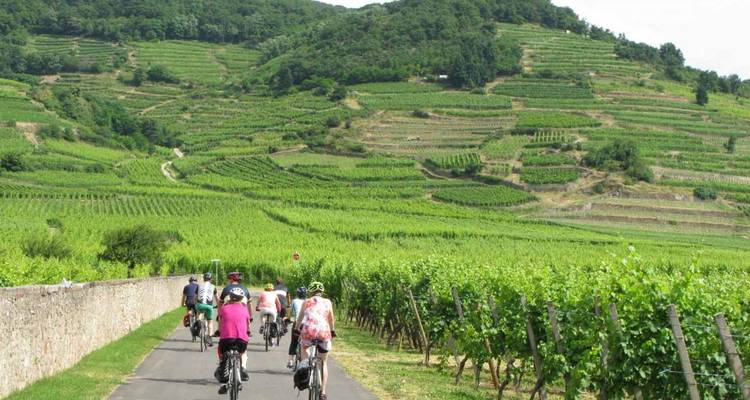 Bike tour, Alsace, France (guided groups) - The Chain Gang Cycle Tours