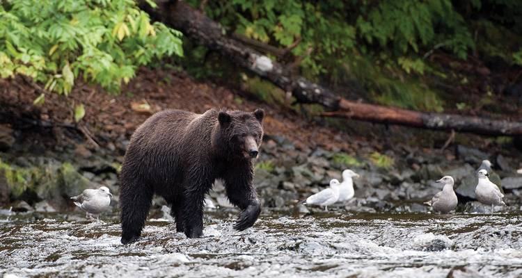 Rockies, Alaska and Yukon Adventure and Glacier Discovery Cruise - Evergreen Tours