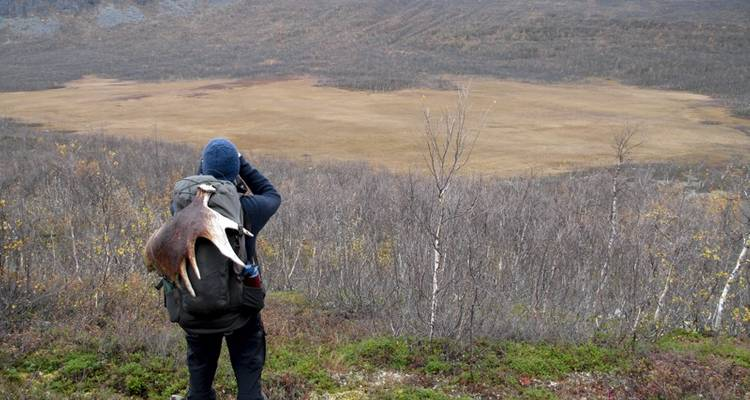 Wildlife expedition in Sarek National Park, Lapland - Wild Sweden