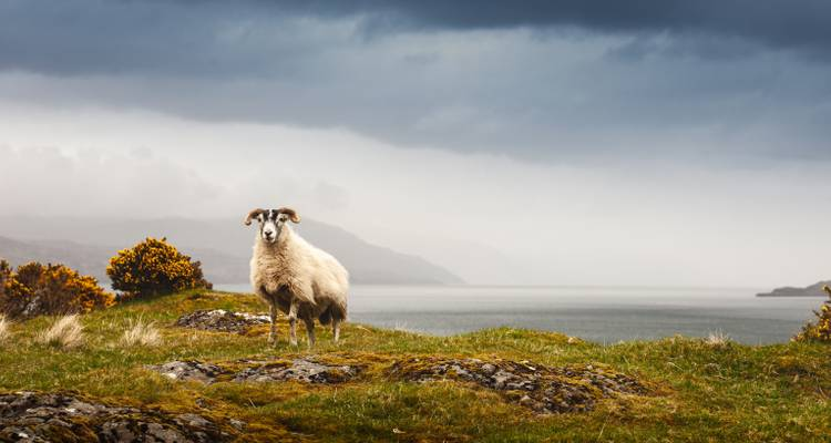 5-Day Iona, Mull & the Isle of Skye Small-Group Tour from Edinburgh - Rabbie's Tours