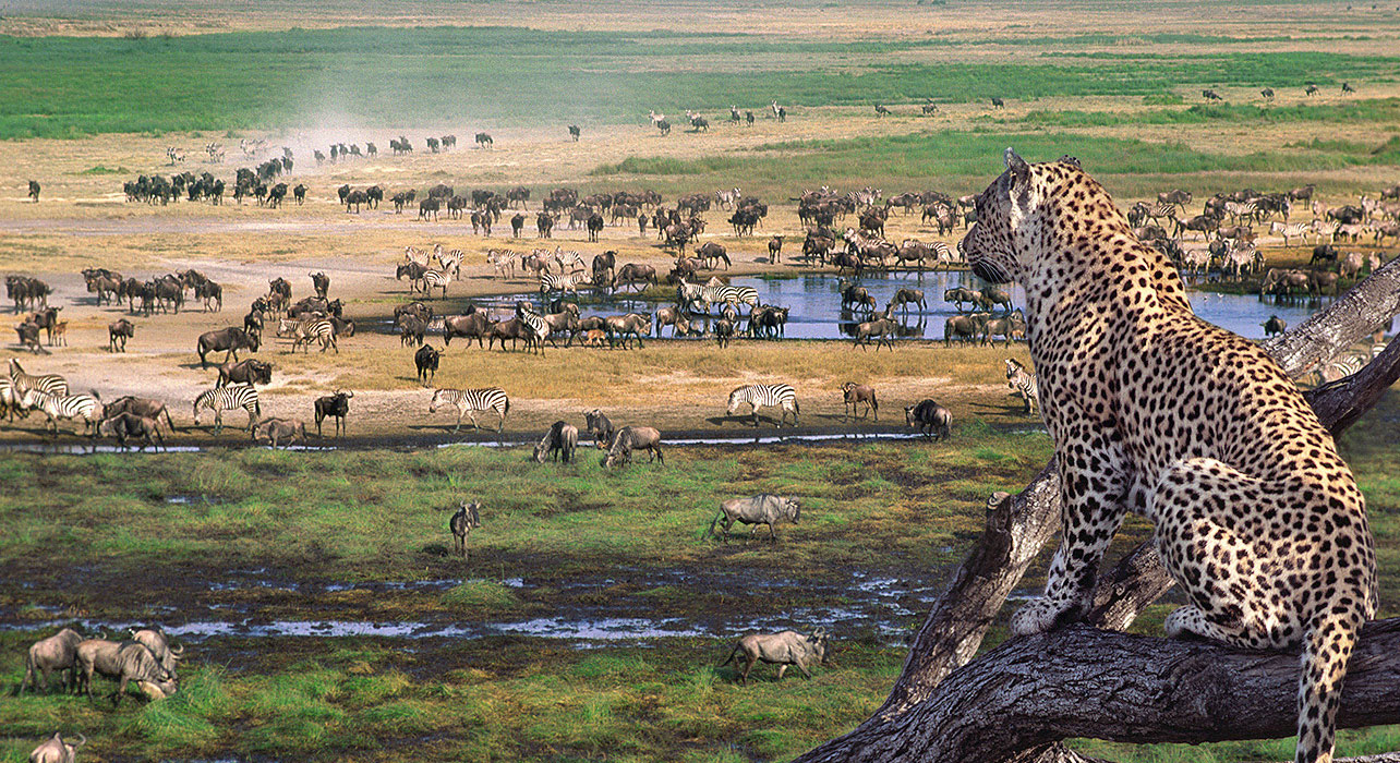 Serengeti wildlife safari4