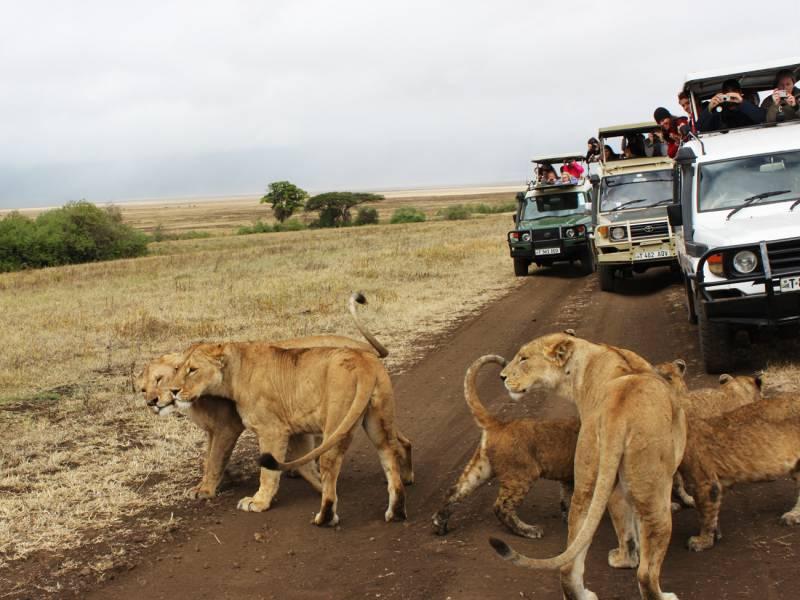 4 Days Amazing Kenya Safari