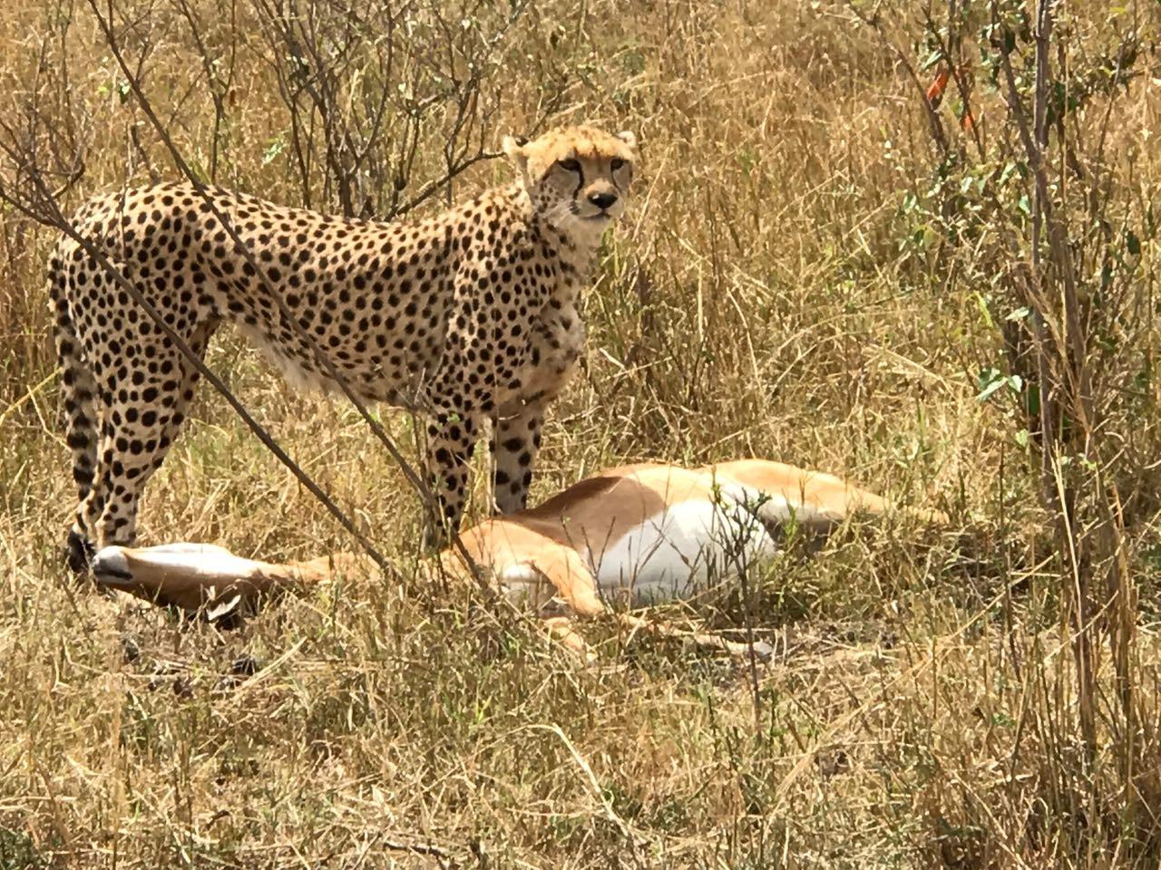7 Days Kenya Safari Ole Kirotet Safaris