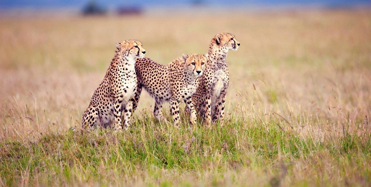 Private Tanzania Safari Tarangire Serengeti Ngorongoro Crater
