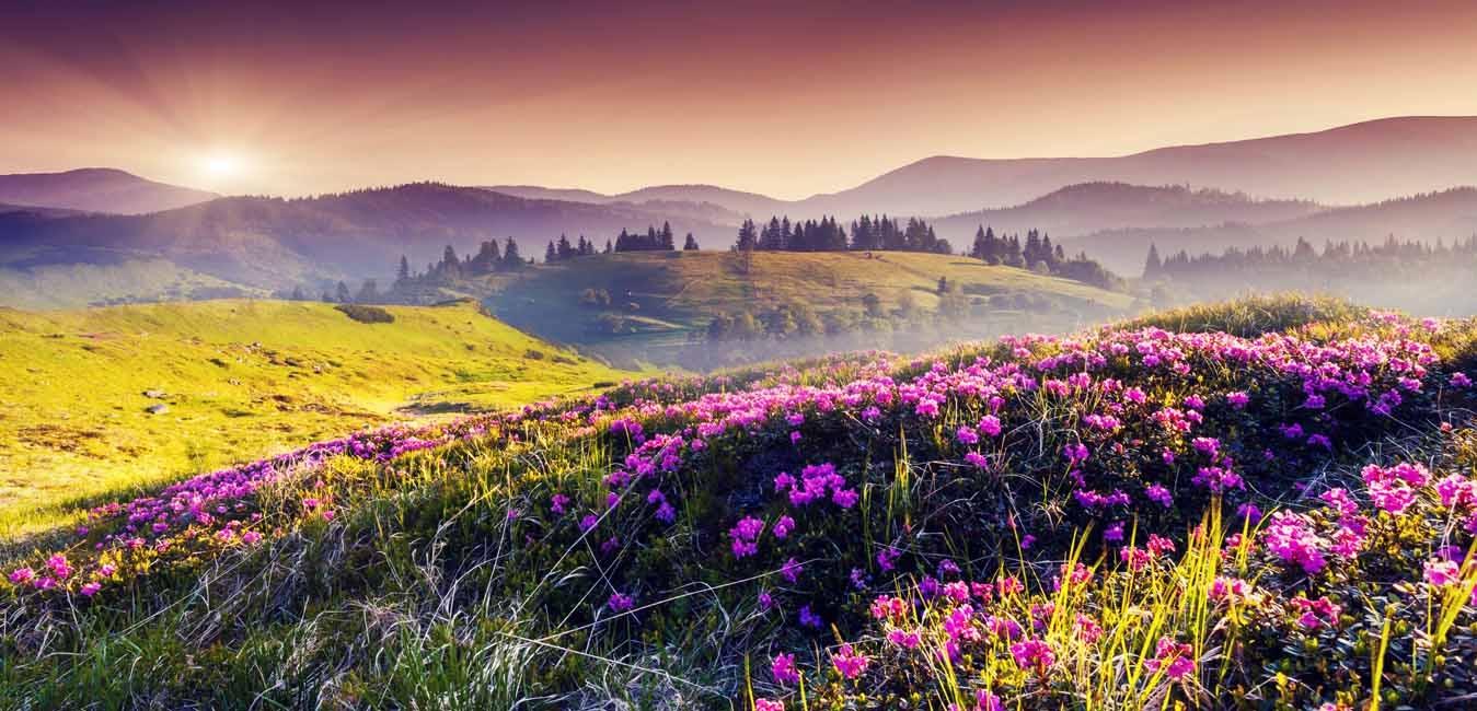 Valley Of Flowers Trek by Let's Himalaya - TourRadar