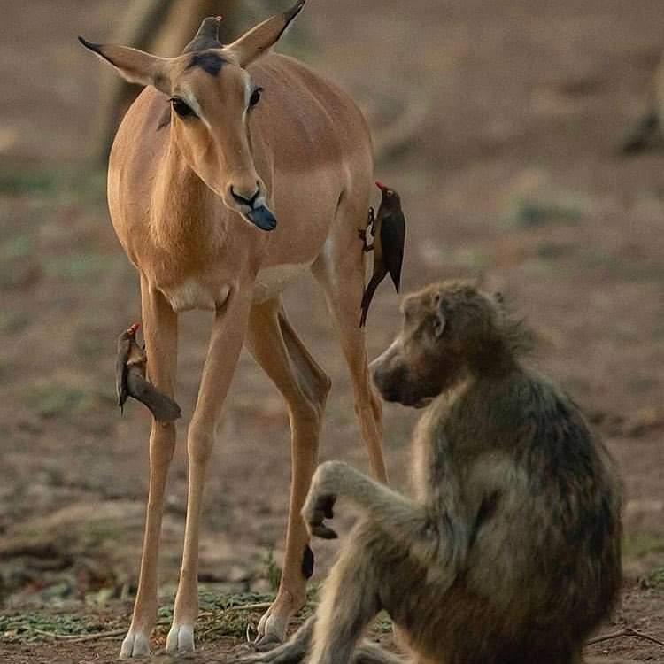 4 Days, 3 Nights Tarangire, Ngorongoro & Manyara Budget Lodge Safari Tour  Tanzania