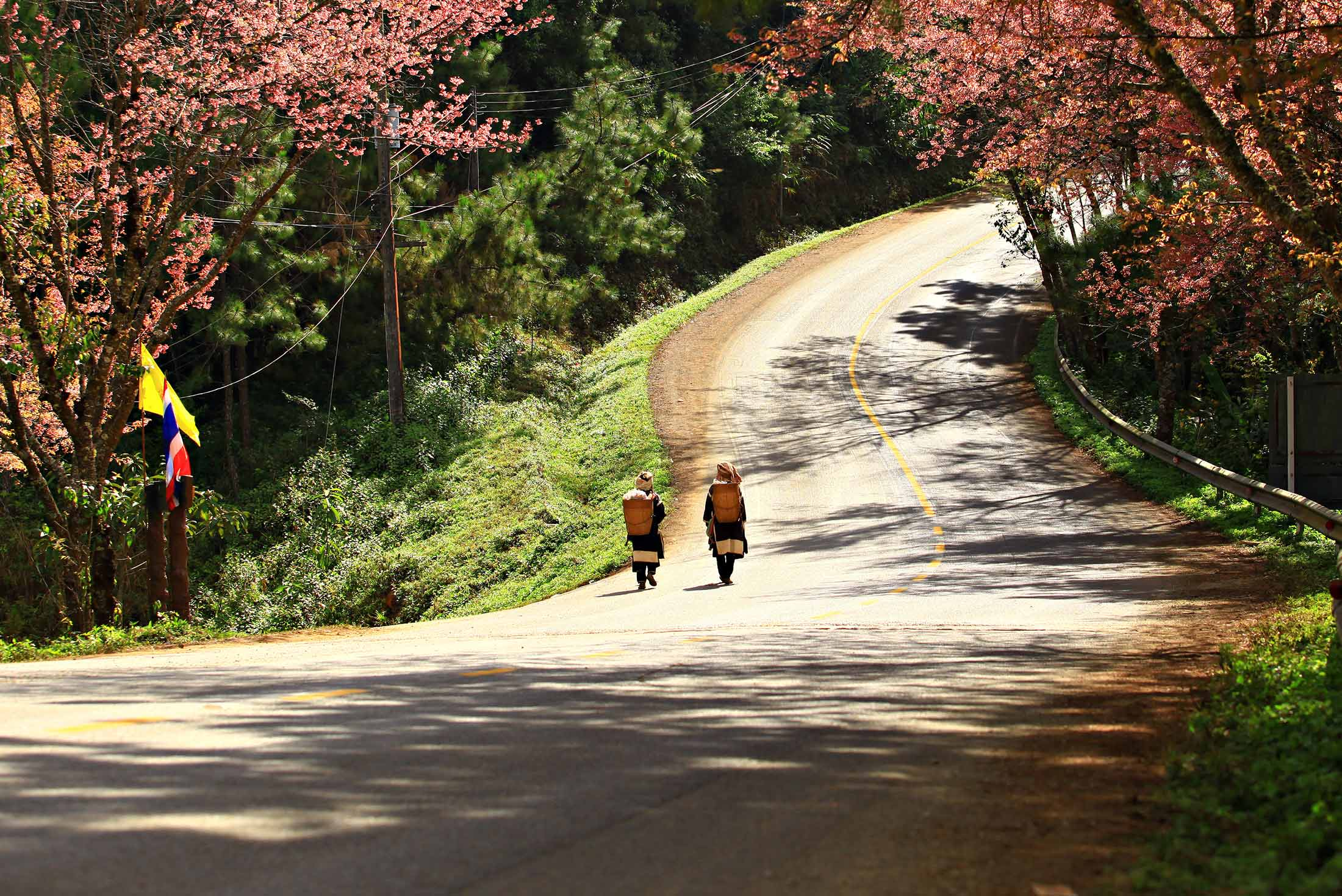 One Week In Northern Thailand By Intrepid Travel With 3