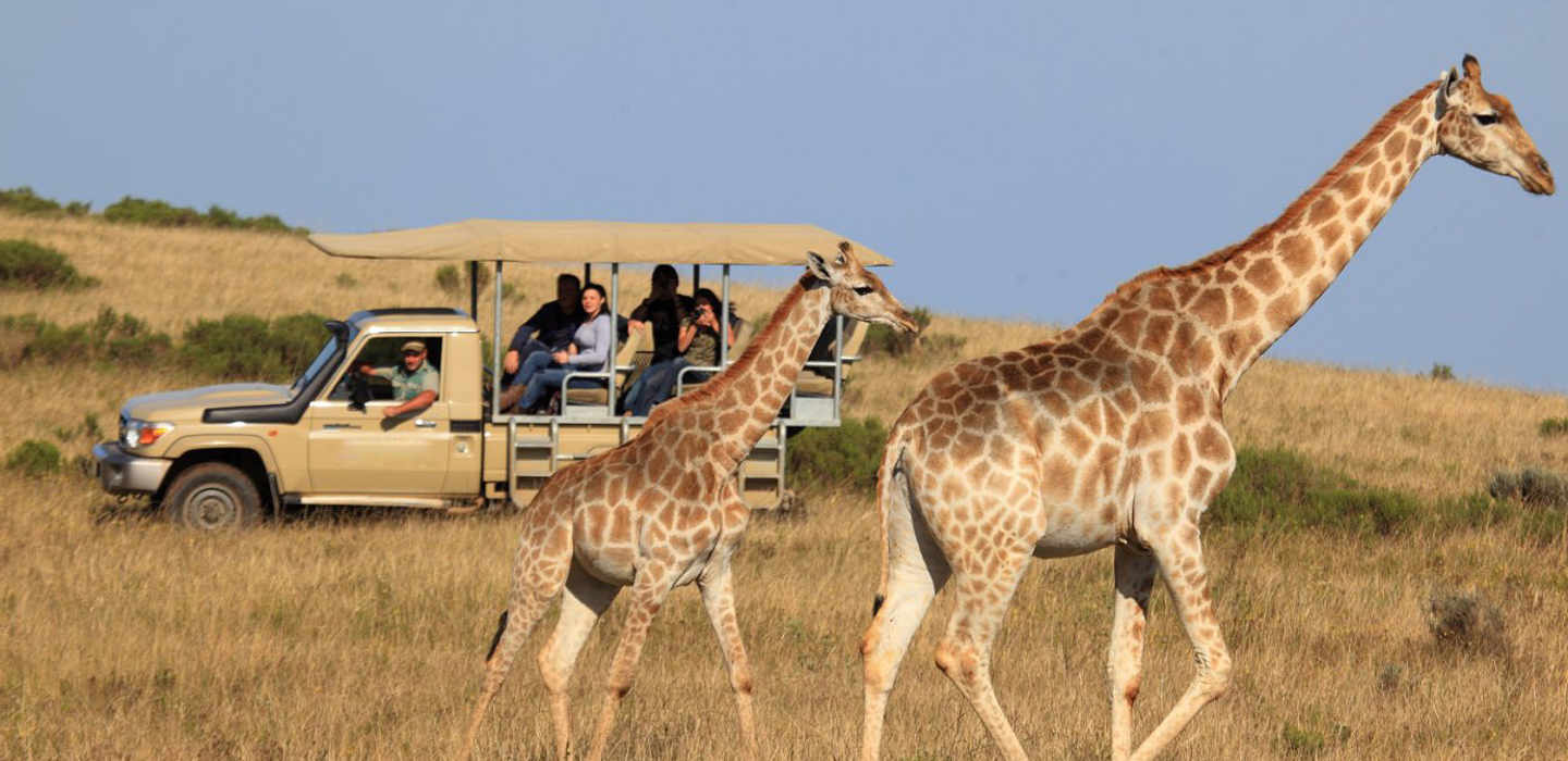 Garden Route And Safari By Hotspots2c With 34 Tour Reviews