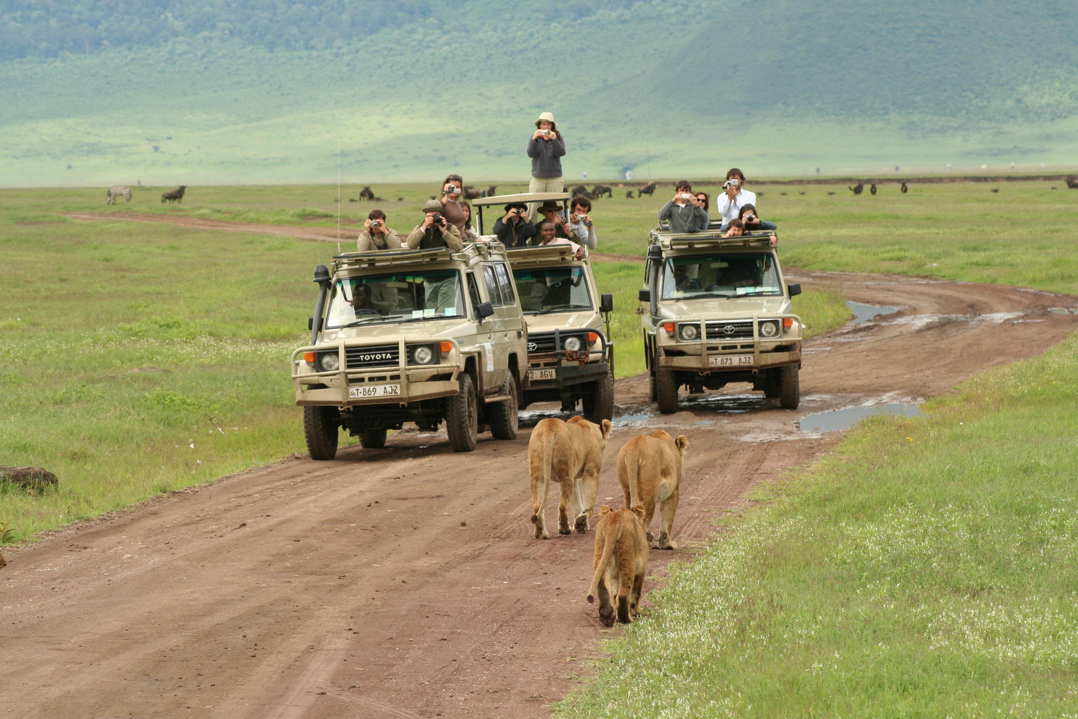 Serengeti And Ngorongoro Crater Tours