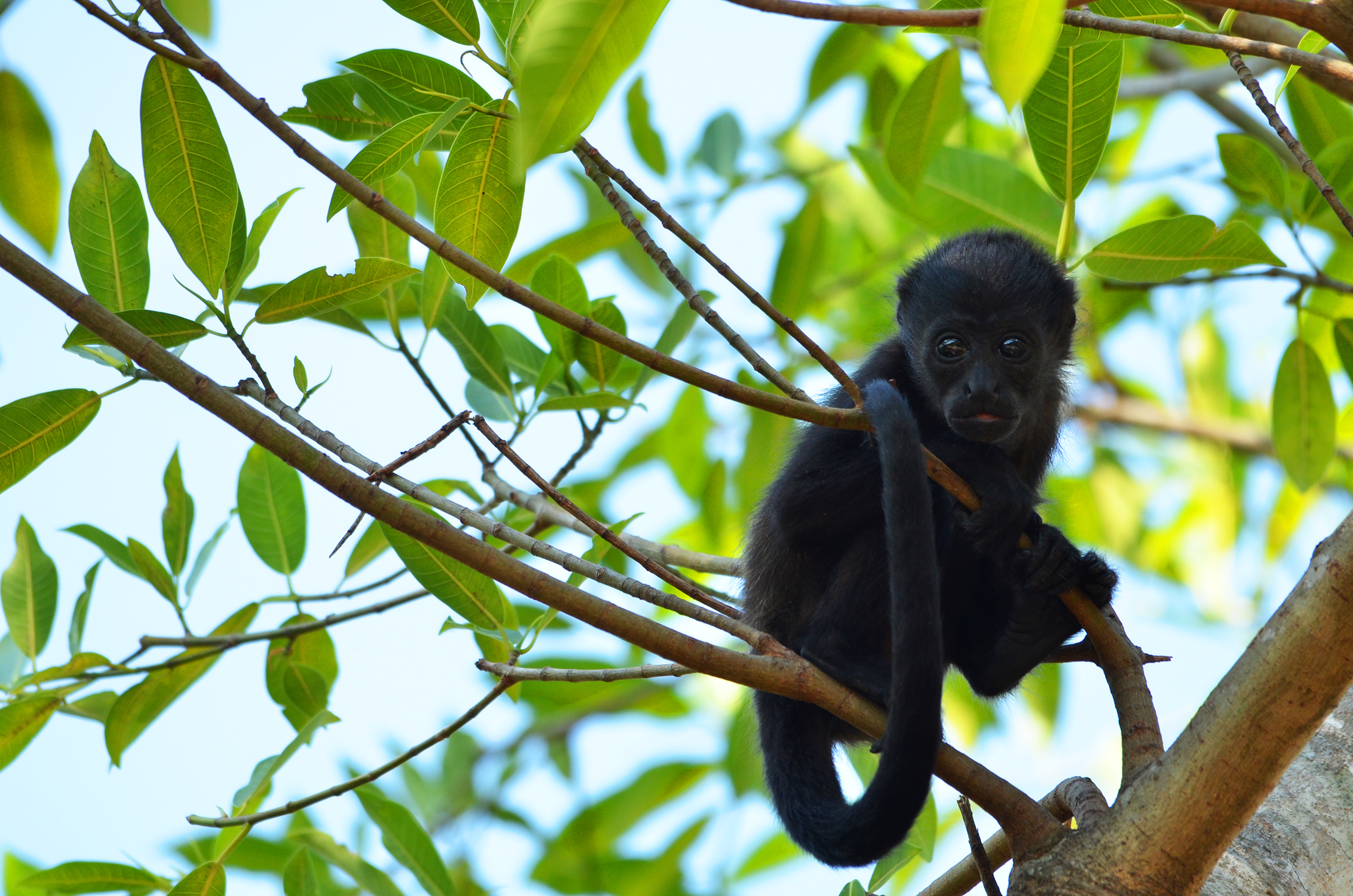 Day Tours Costa Rica Guanacaste