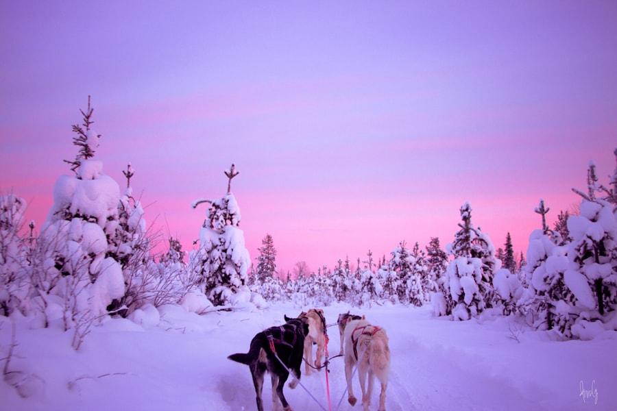 Saariselka Northern Lights Tour