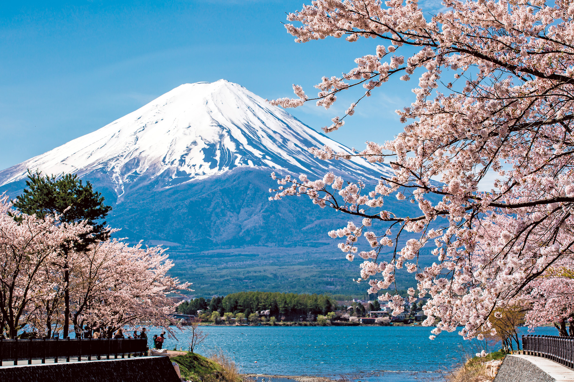 Essential Japan 20182019 By Scenic Luxury Cruises  Tours -5423